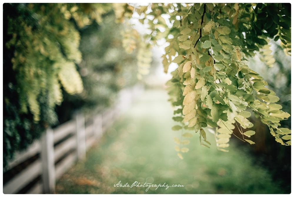 Anda Photography Bellingham wedding photography Bellingham lifestyle wedding photographer Maplehurst Farms_0014
