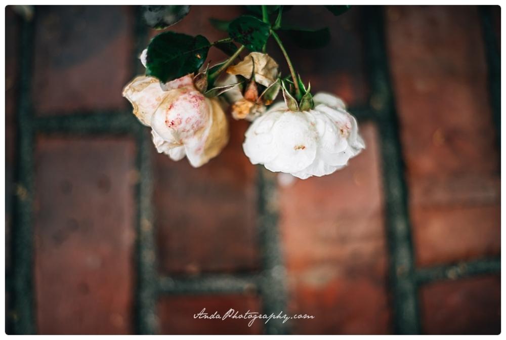 Anda Photography Bellingham wedding photography Bellingham lifestyle wedding photographer Maplehurst Farms_0015